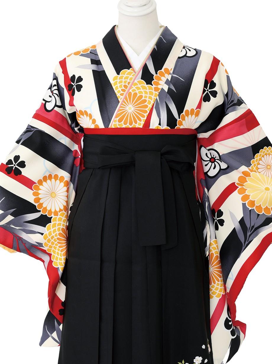 アイボリー地に縞と菊とねじり梅・黒袴(二尺袖)/卒業式