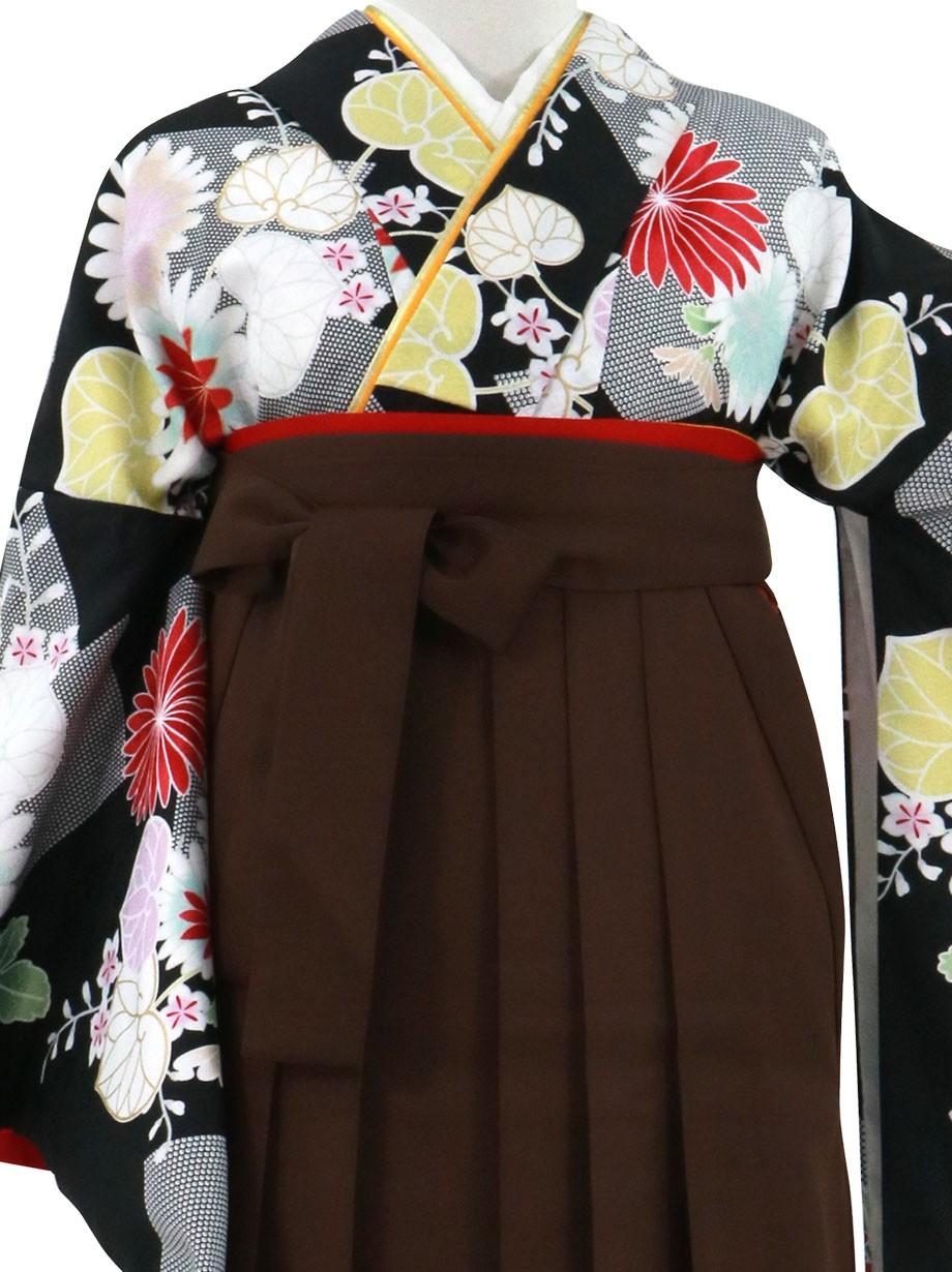 黒地に菊と葵、茶色袴(無地)(二尺袖)/卒業式