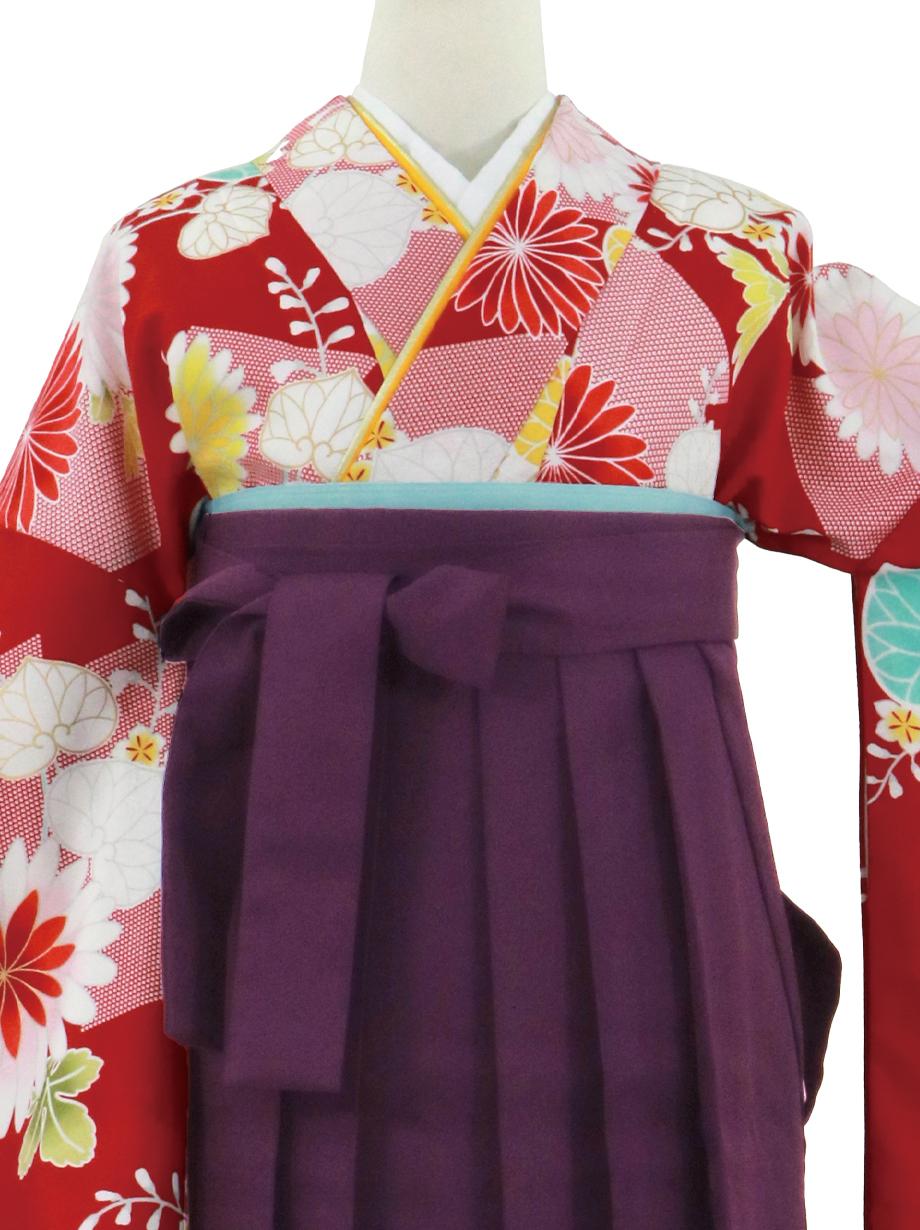 赤地に菊と葵、紫袴(無地)(二尺袖)/卒業式