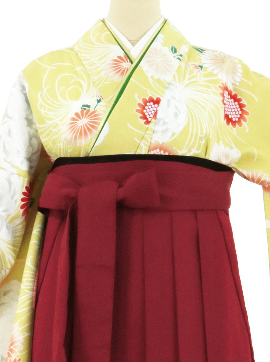 黄色地に菊尽くし、臙脂袴(無地)(二尺袖)/卒業式