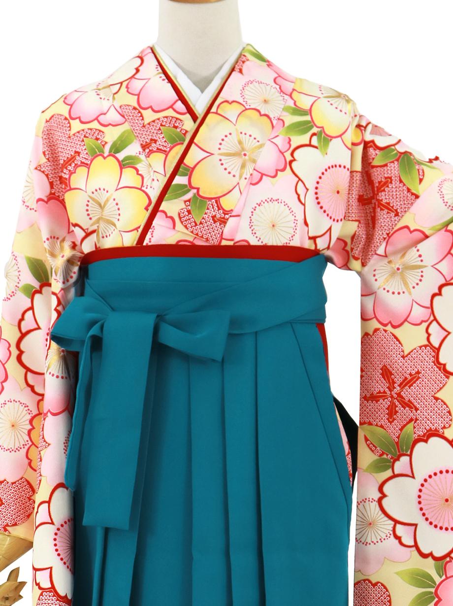 クリームイエローに桜づくし、青袴(無地)(二尺袖)/卒業式