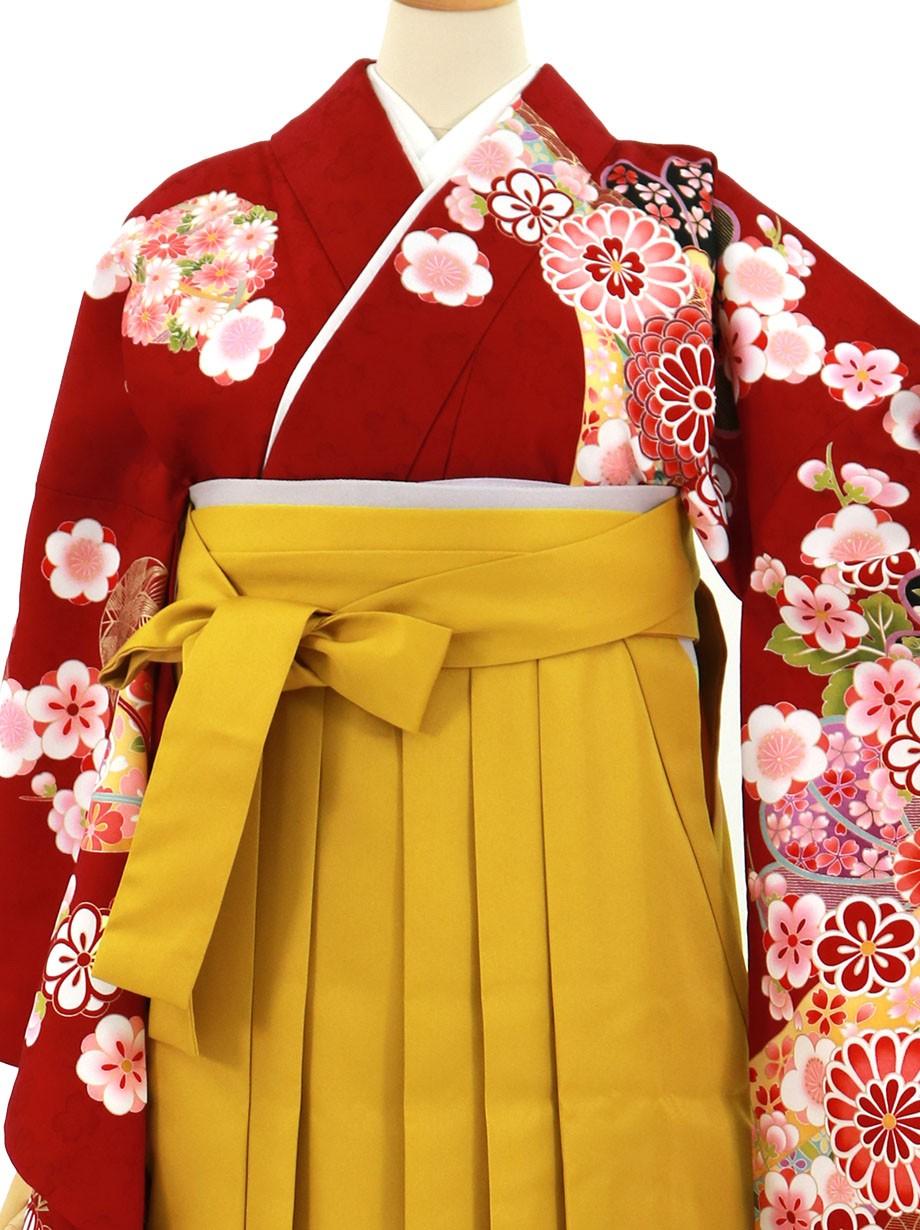 赤地に菊と桜、マスタード袴(無地)(二尺袖)/卒業式