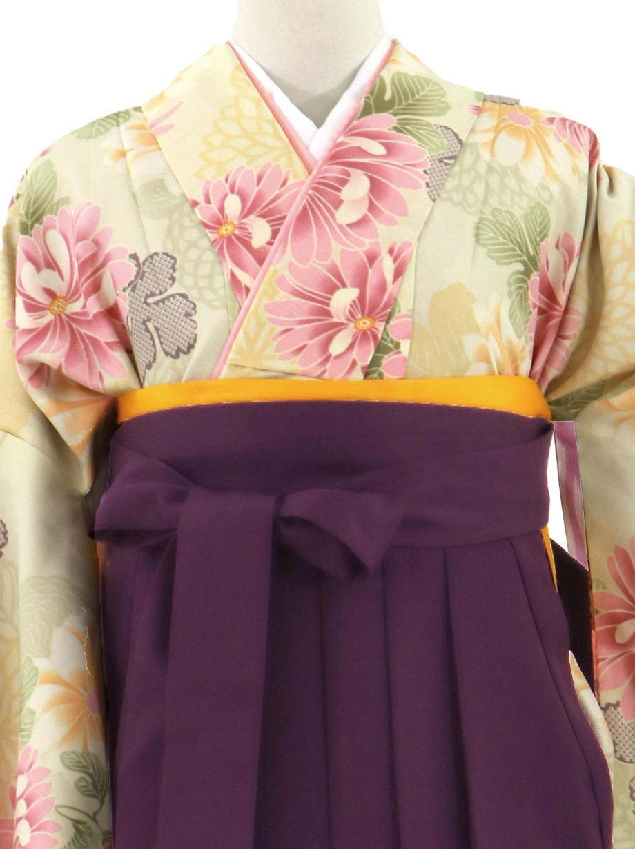 アイボリーに菊づくし、紫袴(無地)(二尺袖)/卒業式