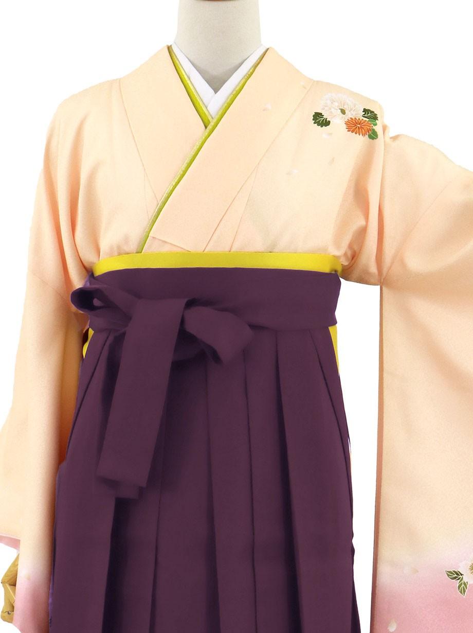 ピンクベージュ地に菊・紫袴(無地)(二尺袖)/卒業式(オリジナルデザイン)