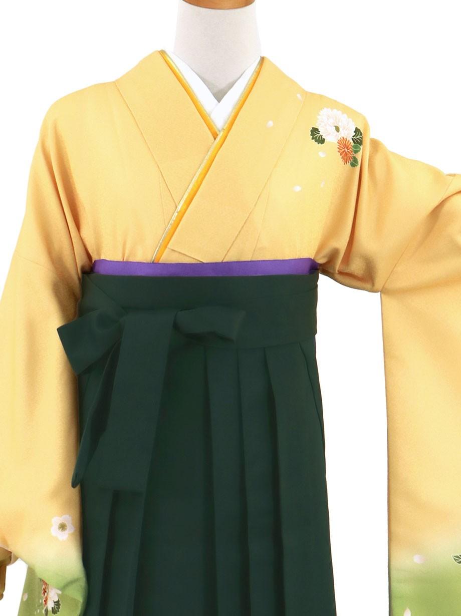 黄色と鶸(ひわ)色地に菊・深緑袴(無地)(二尺袖)/卒業式(オリジナルデザイン)*