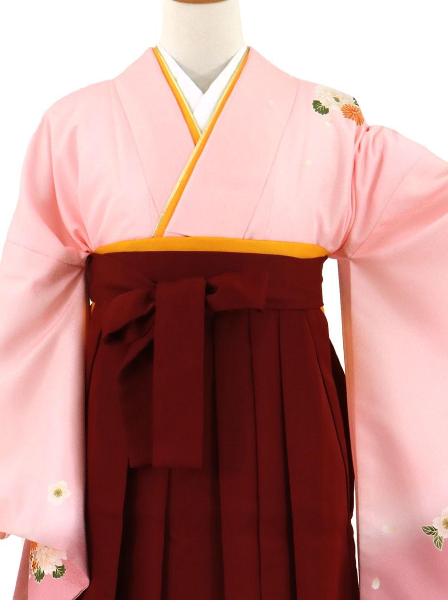 ピンク地に菊・臙脂袴(無地)(二尺袖)/卒業式(オリジナルデザイン)*