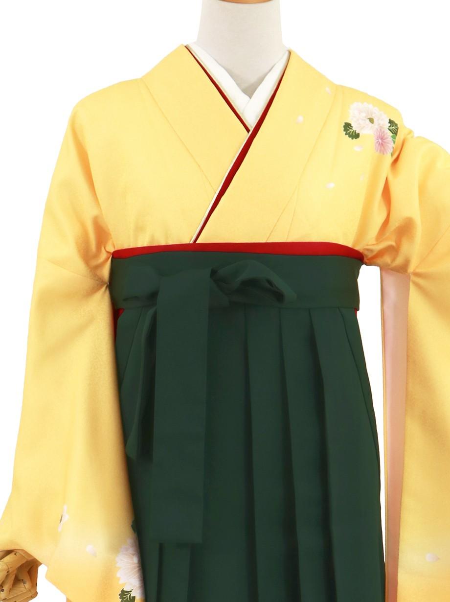 黄色地に菊・深緑袴(無地)(二尺袖)/卒業式(オリジナルデザイン)*