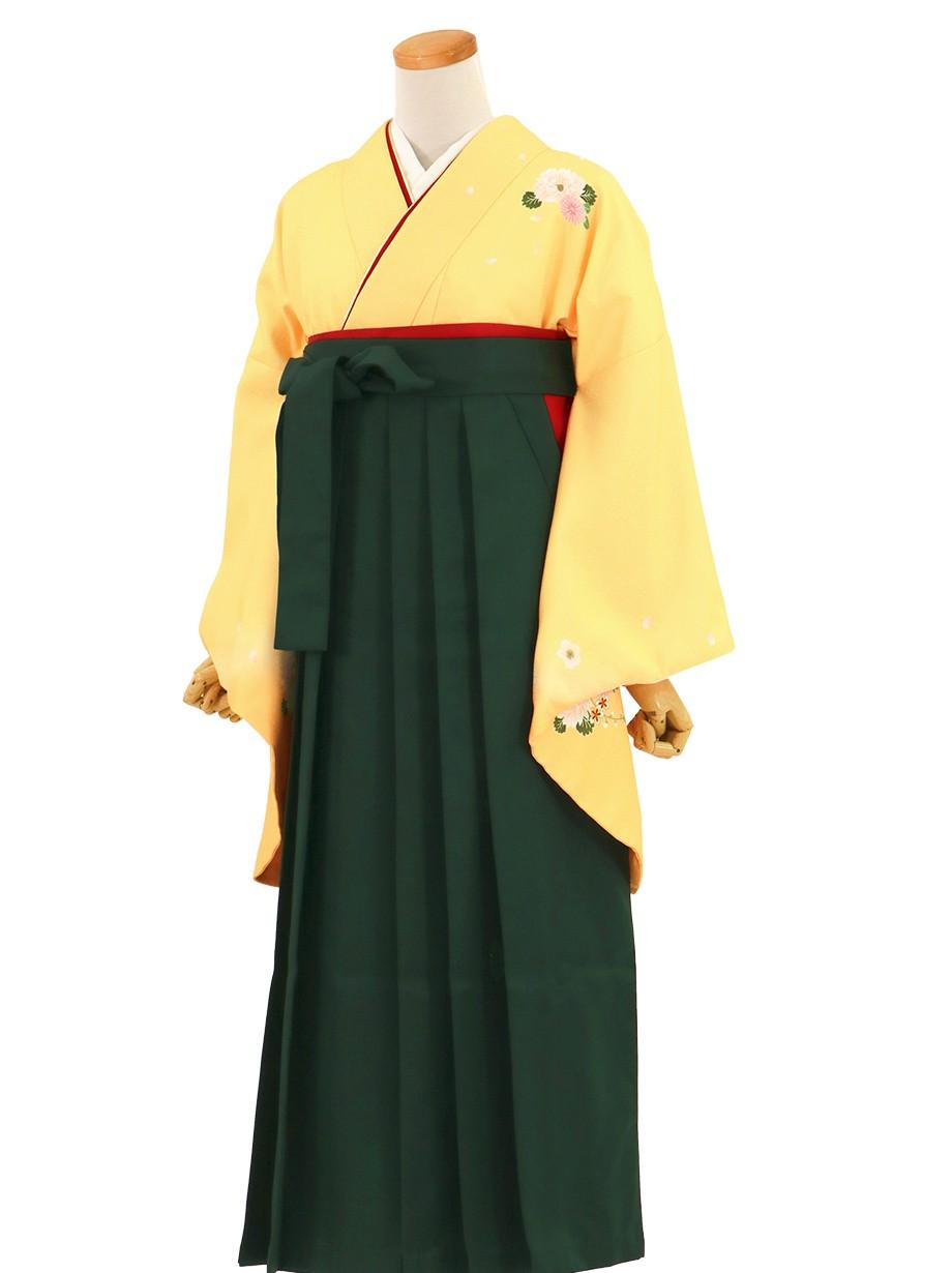 黄色地に菊・深緑袴(無地)(二尺袖)/卒業式(オリジナルデザイン)