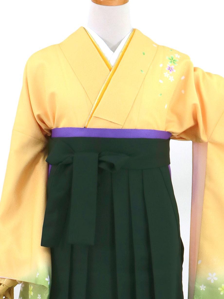 黄色と鶸(ひわ)色地に桜・深緑袴(無地)(二尺袖)/卒業式(オリジナルデザイン)*