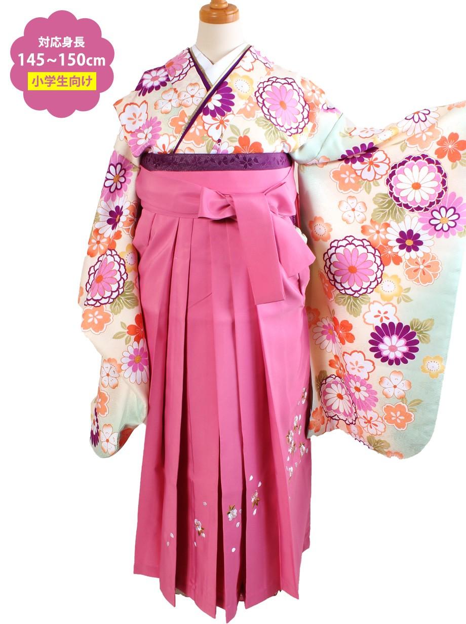 アイボリー地に菊と桜・ピンク袴(小学生)/卒業式