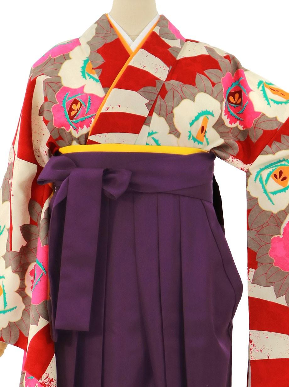 紅白のボーダーに薔薇、紫袴(無地)(二尺袖)/卒業式